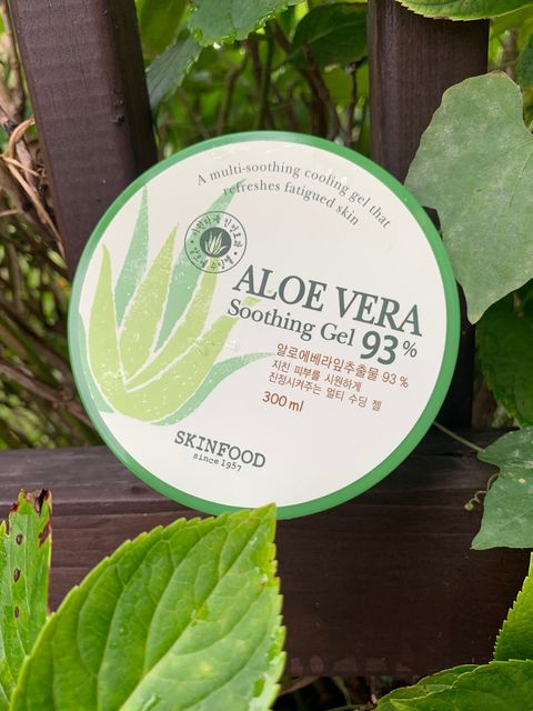 Aloe Vera: You Need This Year Round 🍃