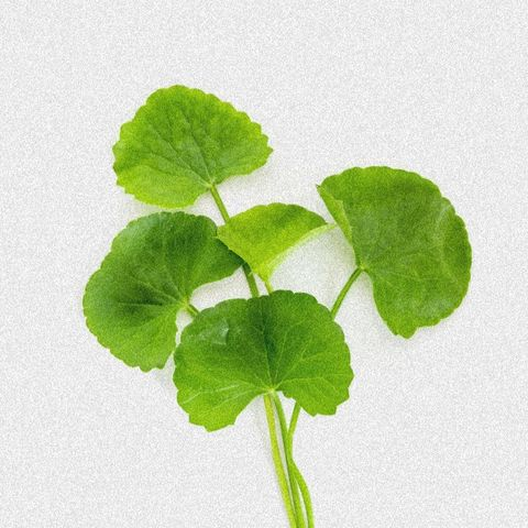INGREDIENT HIGHLIGHT- CENTELLA